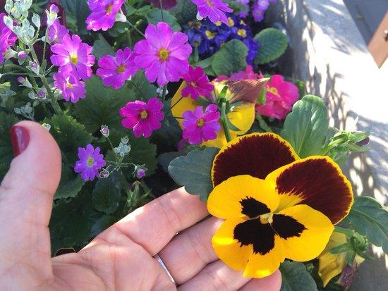 Patio Bellavista : Lindas flores