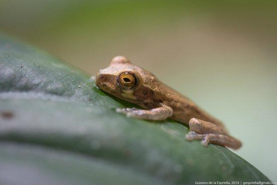 Frogs Heaven: by Gustavo de la Espriella