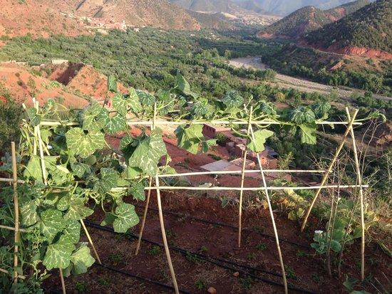 Kasbah Bab Ourika: The gardens