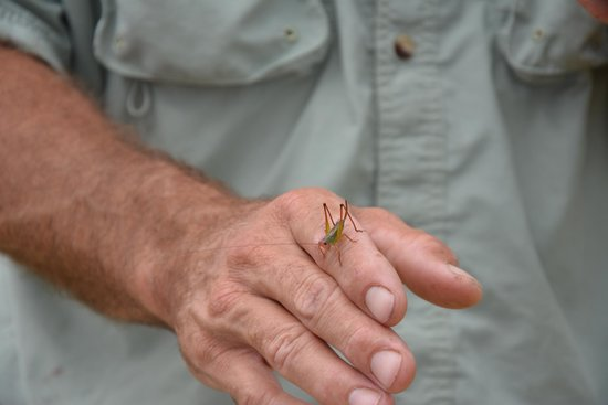 Mack's Fish Camp - Tours: a grasshopper