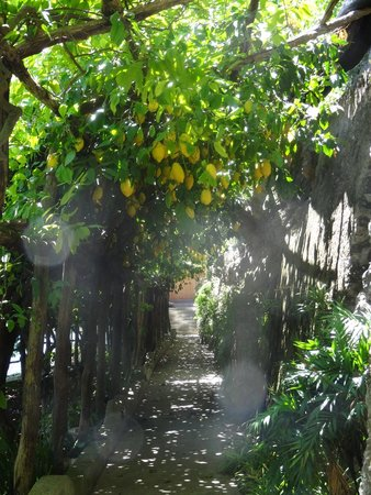 Santa Caterina Hotel: Lemon Trees