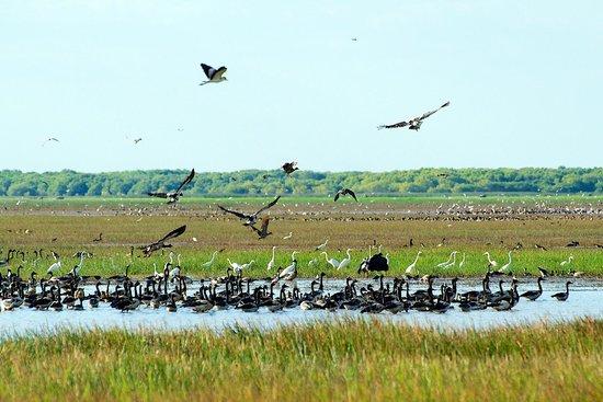 Animal Tracks Safari: Bird life on the wetlands