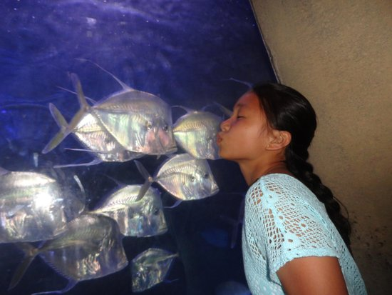 Marine Habitat at Atlantis: kiss kiss