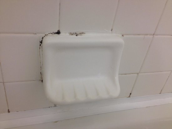 Motel 6 Edgewood: Mold bathtub