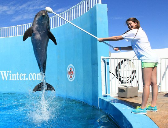 Clearwater Marine Aquarium Fl Top Tips Before You Go