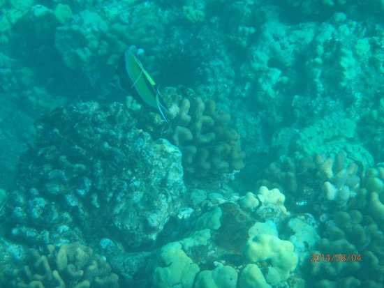 Frogman II Snorkeling Cruise: Fish on Molokini Reef