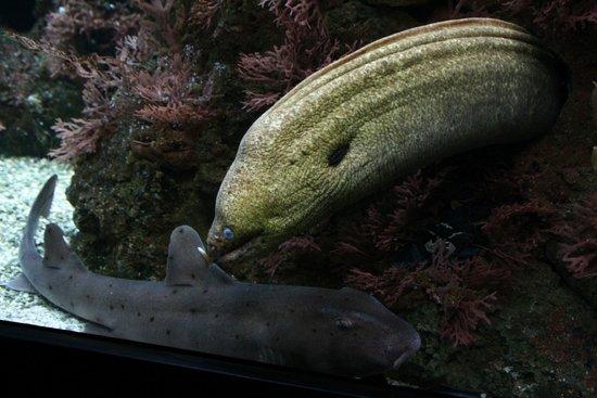 Shedd Aquarium: Moray Eel