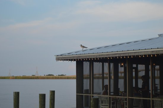 Apalachicola River Inn: Breakfast Gazebo with Wildlife