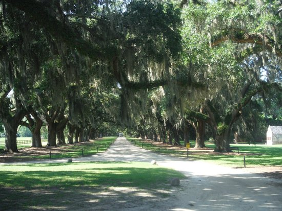 Boone Hall Plantation : Oak tree lined drive