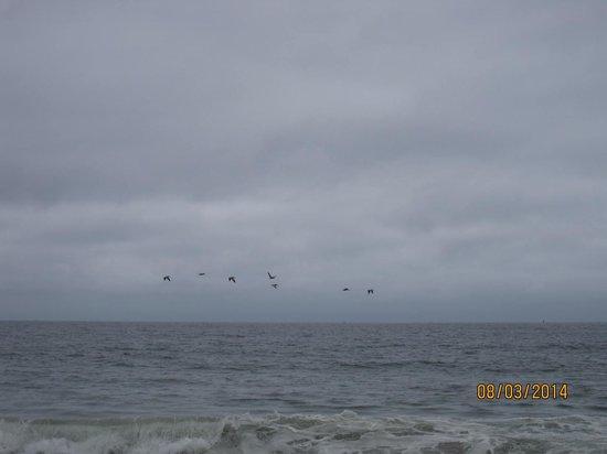Half Moon Bay State Beach: The beach