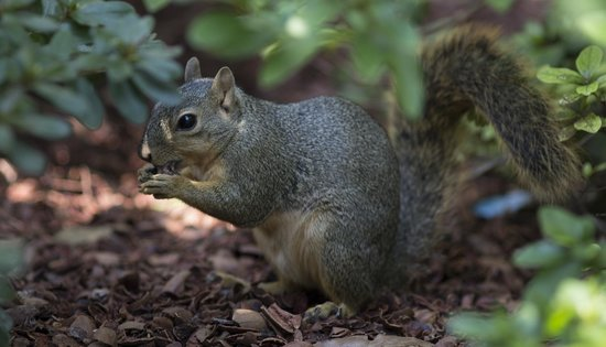 Dallas Arboretum & Botanischer Garten: squirrel