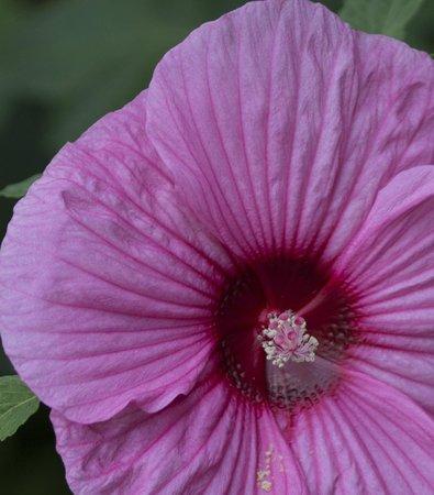 Arboreto y Jardín Botánico de Dallas: macro flower
