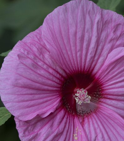 Dallas Arboretum & Botanischer Garten: macro flower
