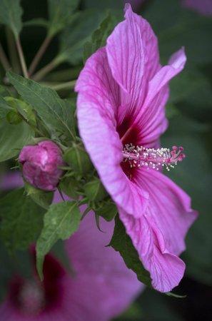 Dallas Arboretum & Botanischer Garten: pink flowers
