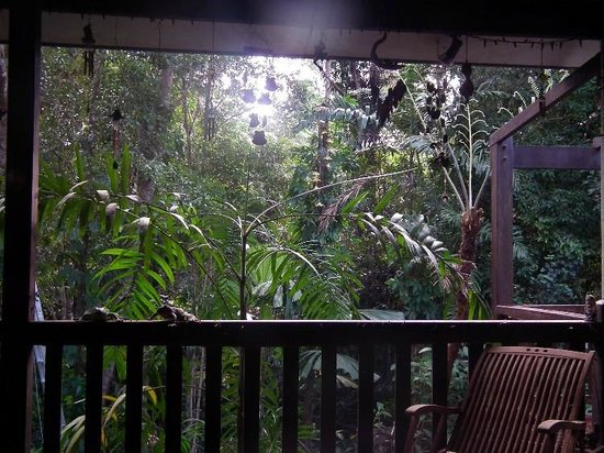 Miju Rainforest Retreat : peacefull sounds of the rainforest