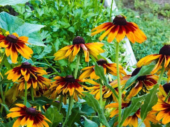 Coho Cottages : Flowers in the garden.