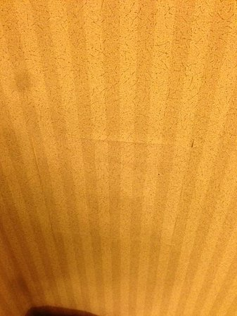 Best Western Green Bay Inn Conference Center : Bathroom wall