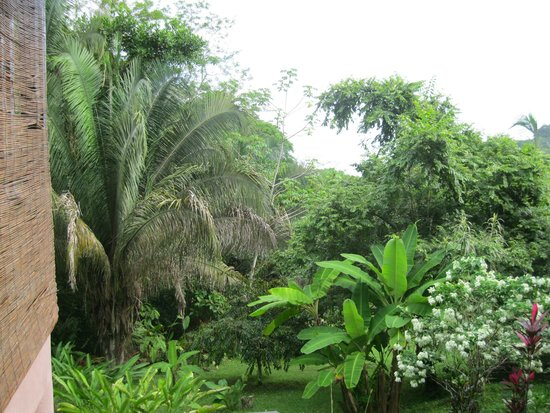 TikiVillas Rainforest Lodge & Spa: the view