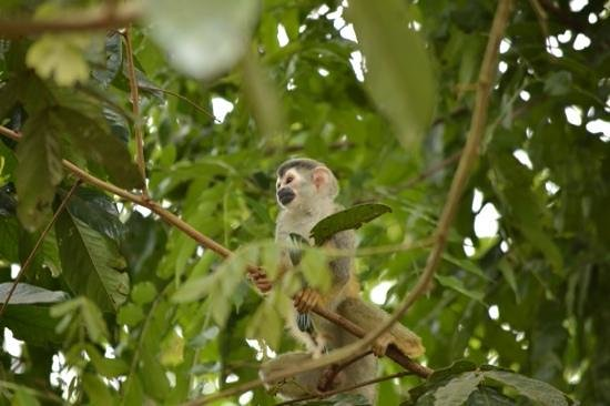 Hotel Parador: Squirrel Monkey