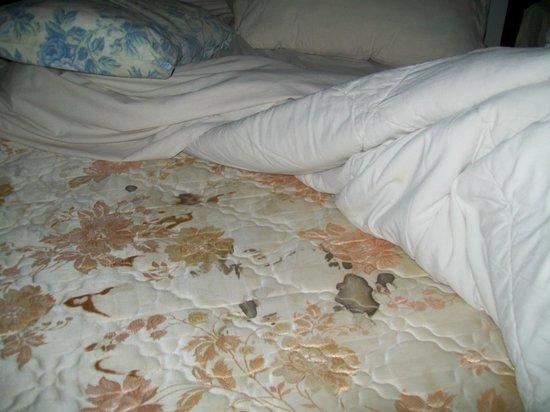 Sukun Bali Cottages: Blood stains on mattress