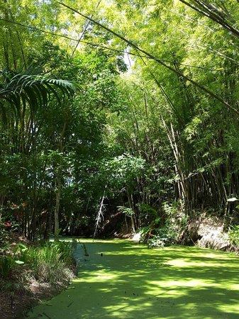 La Vega Garden Centre : Lush greens
