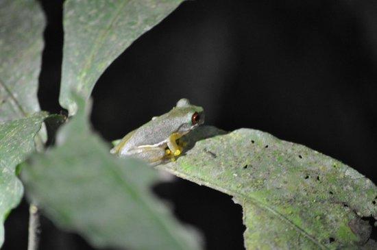 Don Juan Tours: Tink Frog