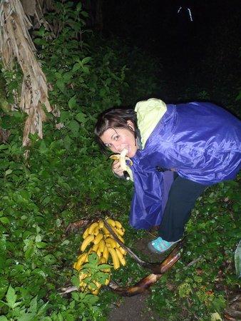 Don Juan Tours: Banana samples