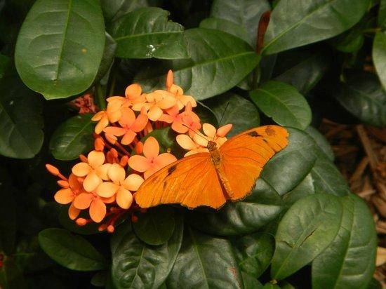 Bronx Zoo : from butterfly garden