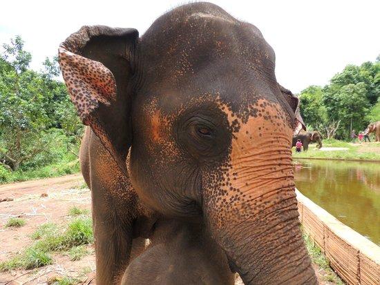 Patara Elephant Farm - Private Tours : Sunflower