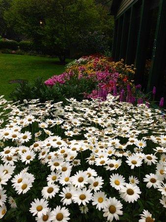 Glen Iris Inn: Flowers at the inn