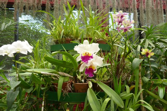 Royal Botanical Gardens: Variety of orchids in the orchid house