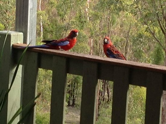 Eaglereach Wilderness Resort: Enjoying the early morning sunshine on the balcony of the dining room...