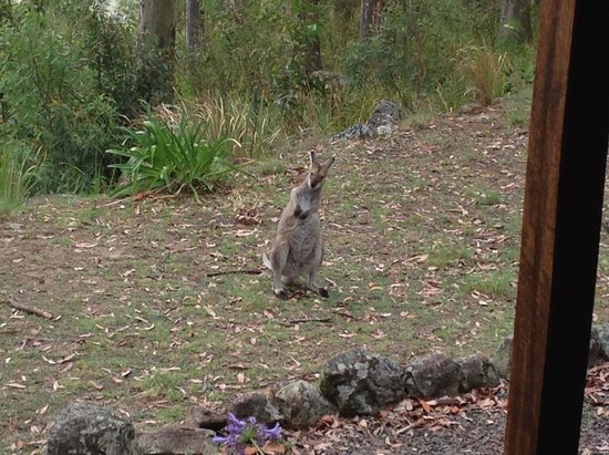 Eaglereach Wilderness Resort: A friendly daily visitor to our cabin..