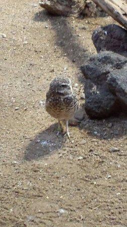 ZooAmerica North American Wildlife Park: Owl