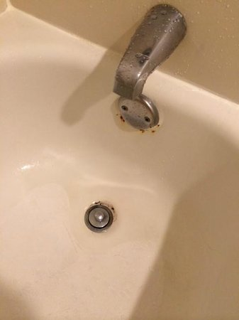 Quality Inn & Suites Lexington : bañera del cuarto