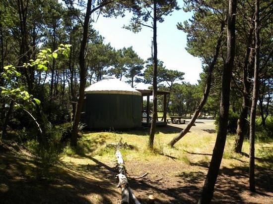 Grayland, WA: yurt 61