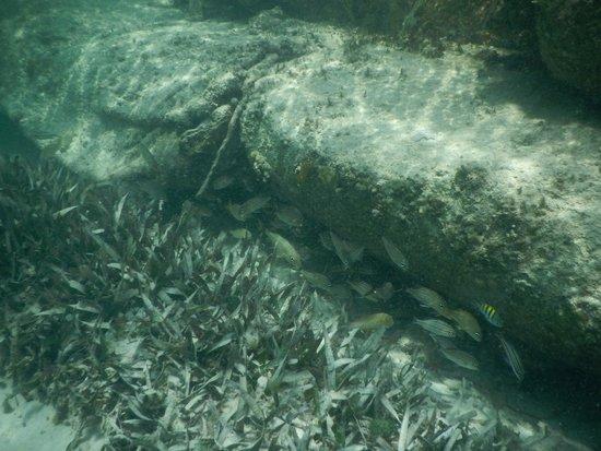 Grand Velas Riviera Maya: Snorkeling off the beach