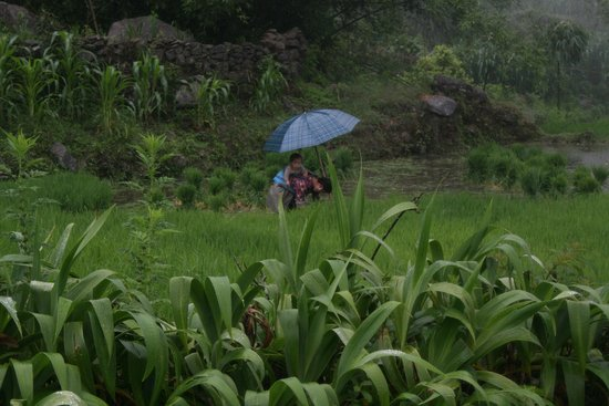 Viet Sapa Travel : Mom & Daughter working in the field
