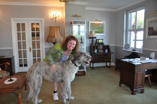 Wolfhound Adventure Tours: Seamus the Irish Wolfhound in Dingle, County Kerry