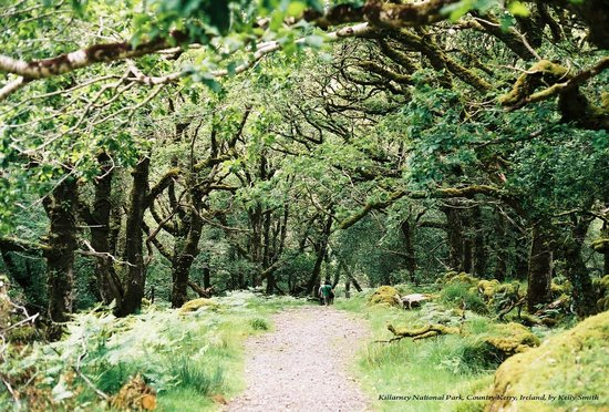 Wolfhound Adventure Tours: Killarney National Park, County Kerry