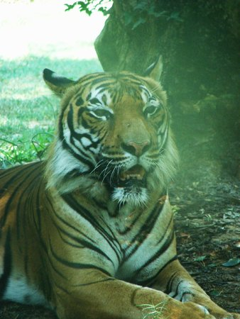 Birmingham Zoo : Great Posing