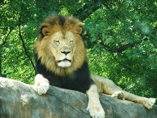 Birmingham Zoo : Quite Regal