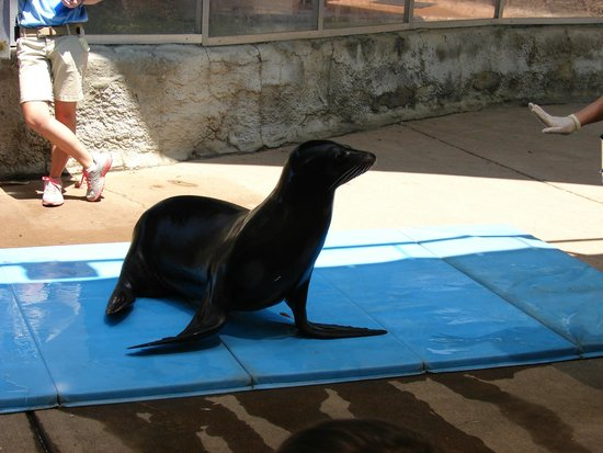 Birmingham Zoo: Cool Sea Lion