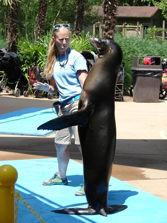 Birmingham Zoo: Clapping Sea Lion