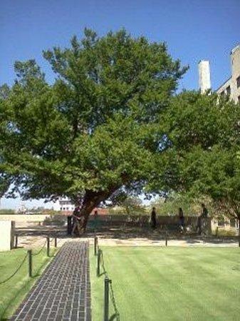 Oklahoma City National Memorial & Museum: Survivor Tree