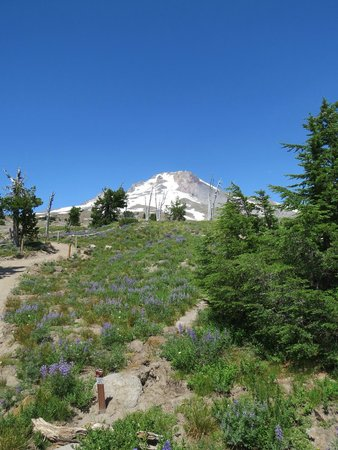 Timberline Lodge Ski Area: up the trail