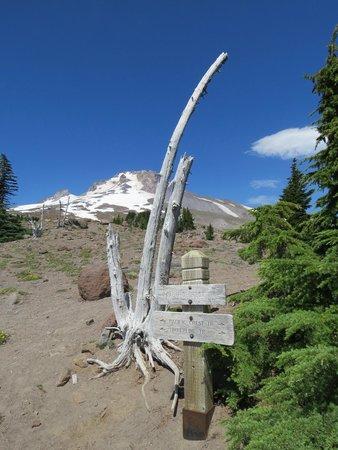 Timberline Lodge Ski Area: Hiking Trail