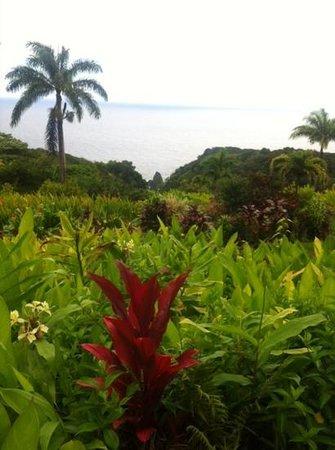 Hana Highway - Road to Hana : gardenEden Road to Hana