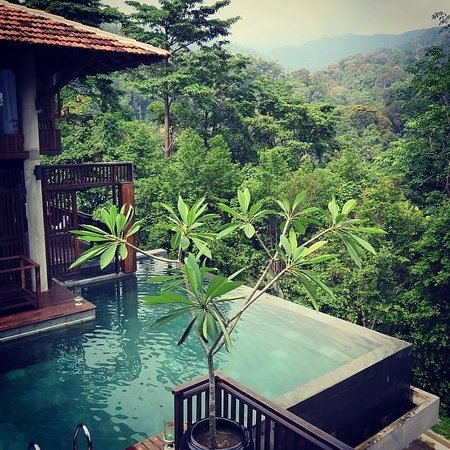 The Shorea: A pool in the woods