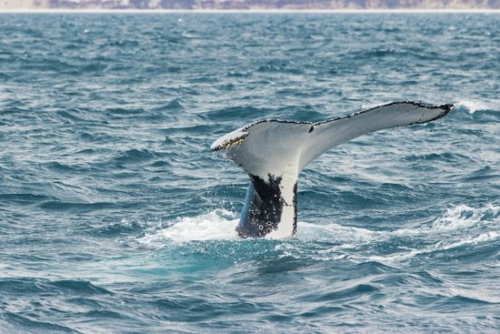 Freedom Whale Watch: ... a whale